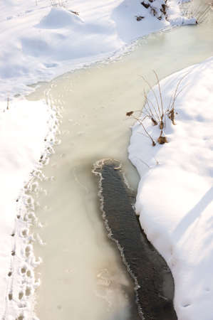 animal tracks along frozen creek edge