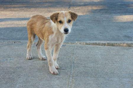 sad small stray cuban dog