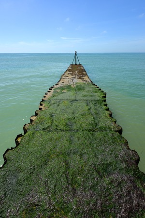 english channel: Green algae covered jetty in English Channel Stock Photo