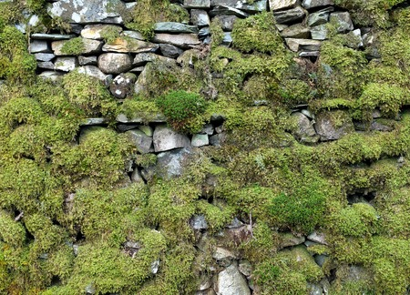 dry stone: Mossy dry stone wall, Lake District, UK Stock Photo