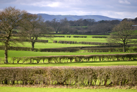 south downs: Network of hedges separate grazing land, with South Downs in background. Stock Photo