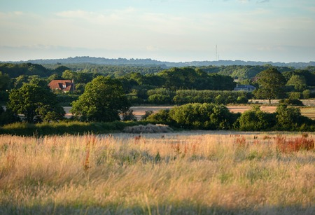 weald: English countryside in summer, hay meadows and trees