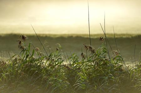 ance: Canne in foschia mattutina e nebbia