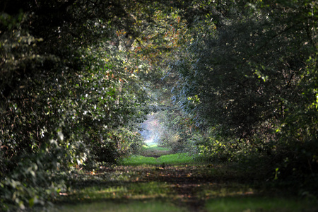 wooded path: Wooded foot path  green lane Stock Photo