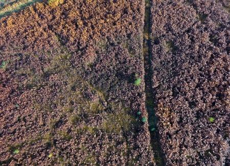 birds eye: Birds eye view of heather and bracken in autumn, Ashdown Forest, Sussex, UK