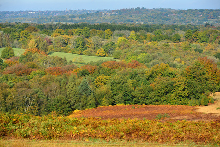 Vibrant colours of autumn in the Ashdown Forest, Sussex, UK, setting for the Winne the Pooh books.