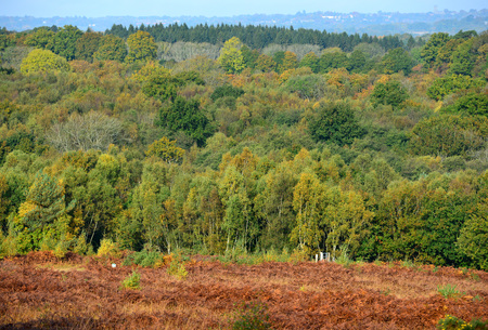 sussex: Vibrant colours of autumn in the Ashdown Forest, Sussex, UK, setting for the Winne the Pooh books.