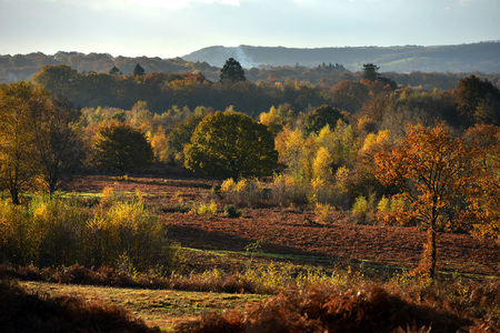 sussex: Autumnal colours of trees and bracken in Sussex