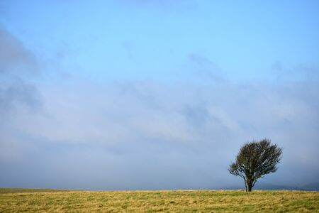 Windswept lone tree on the south downs
