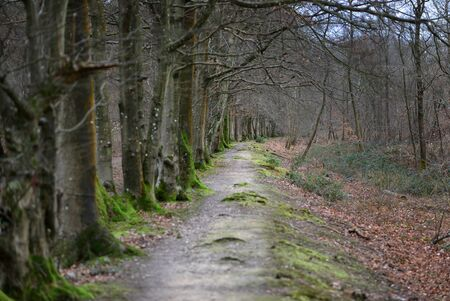 Winter woodland path surrounded but moss and bracken Stock Photo