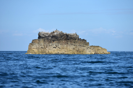 Sea rock near Sark with different seabirds on top Stock Photo