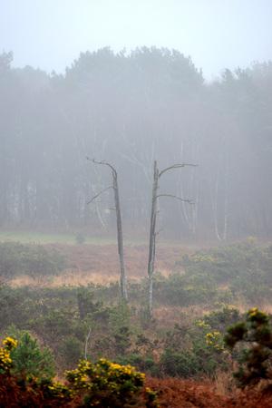 霧のムーアの風景の中の双子の枯れ木 写真素材 - 94450638