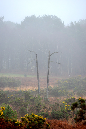 안개 낀 풍경에 트윈 죽은 나무