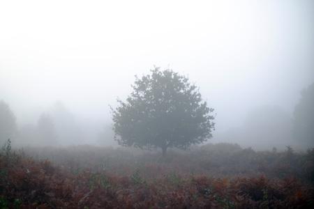 Single tree in a misty heath, Chailey, East Sussex, UK