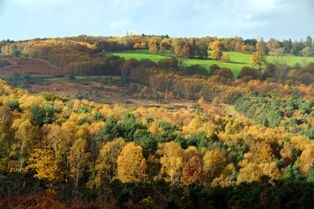 Autumn colours in Ashdown Forest, East Sussex, UK