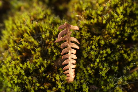 Close up of a dried bracken front