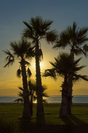 Palm trees and sunset on the beach Stock Photo