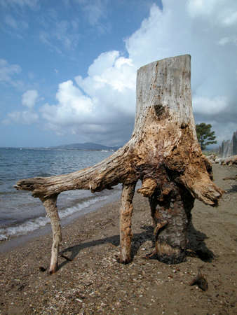 bole: Bole of a dead tree by the sea Stock Photo