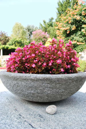 Stone bowl with pink flowers in summer garden Stock Photo