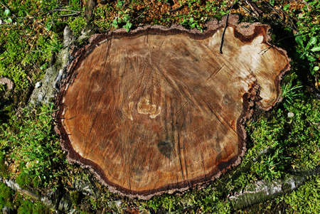 Cut tree trunk in the grass, aerial view