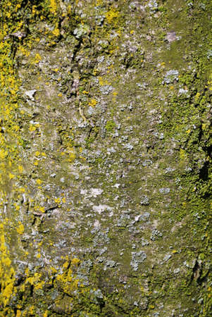 Detail of old tree bark background texture Stock Photo - 7535951