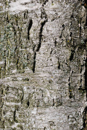 Detail of old tree bark background texture Stock Photo - 7564515