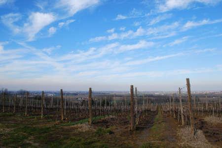 Vineyard landscape panorama in winter, San Colombano al Lambro, Po Valley, Lombardy, Italy