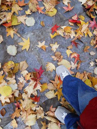 Woman walking through yellow and red autumn leaves photo