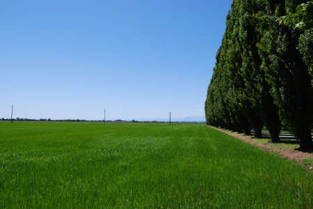 Summer landscape of flat farmland and perspective row of trees, Po valley, Italy