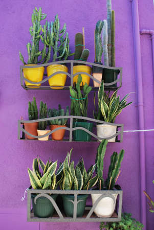 Group of different succulents plants in colorful pots on violet background