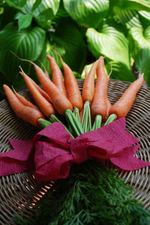 A bunch of fresh carrots on natural