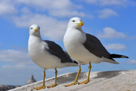 parapet: A couple of gull on Vittoriano monument parapet, in the center of Rome Stock Photo