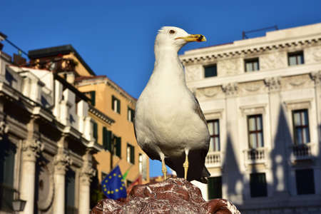 saint mark square: Seagull on the top of a lion statue in Saint Mark Square, Venice