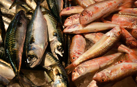 Atlantic Mackerel and Goatfish at the Venice old fish market Banque d'images