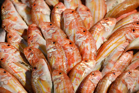 Red Goatfish au marché de Old Fish de Venise