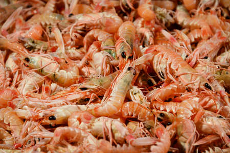 Scampi, prawn or Norway lobsters seafood at the Venice old fish market