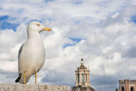 La mouette regarde le ciel et les nuages ??au-dessus du centre-ville de Rome