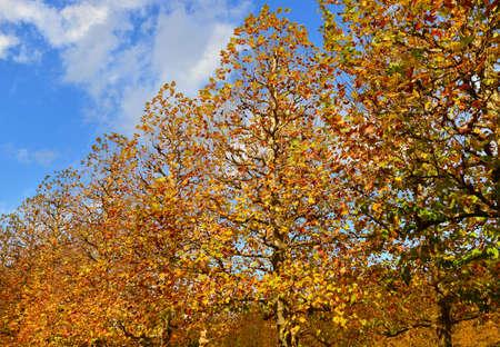 Feuilles d'automne jaune et rouge sur les arbres