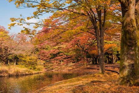 Feuilles d'automne jaune et rouge dans un parc