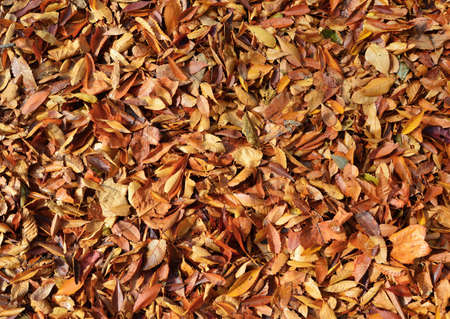 Autumn yellow and brown leaves background Banque d'images