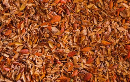Fond de feuilles automne jaune, brun et rouge Banque d'images