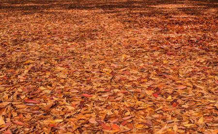 Lit d'automne jaune, brun et rouge