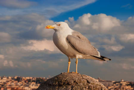 Seagull with Rome city center ancient skylinewith beautiful clouds at sunset