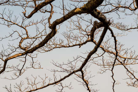 Winter bare branch tree as background