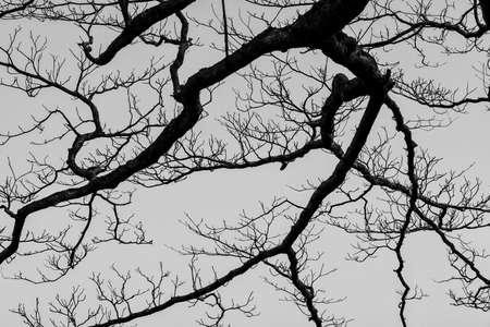 Winter bare branch tree as background (Black and White) Reklamní fotografie