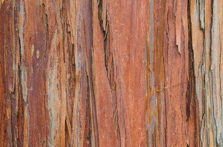 Red and brownish tree bark with rough surface as background Reklamní fotografie - 120740302