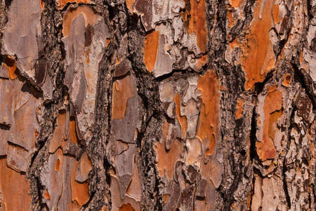 Detail of Maritime Pine bark with rough surface as background Reklamní fotografie - 120740404
