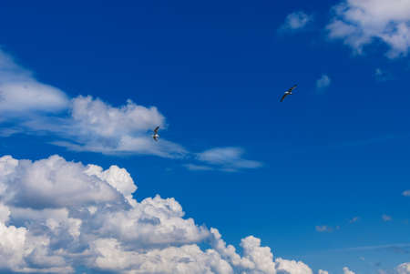 Two seagulls flying in a beautiful blue sky with white clouds as background