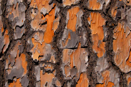 Detail of Maritime Pine bark with rough surface as background Reklamní fotografie