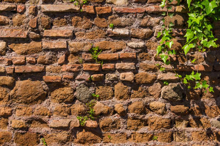Old composite wall with ivy leaves and green plant on as background Reklamní fotografie - 122722113